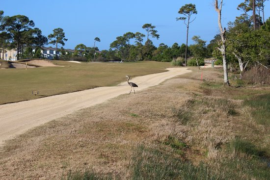 Lost Key Golf Club: You'll find plenty of wildlife on this course, as well as the Cucina cart paths !
