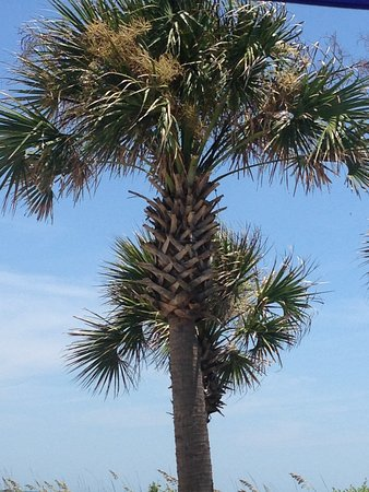 Pawleys Island Picture