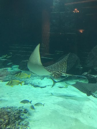 Marine Habitat at Atlantis: photo0.jpg