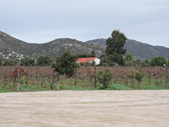 Foto de Valle de Guadalupe
