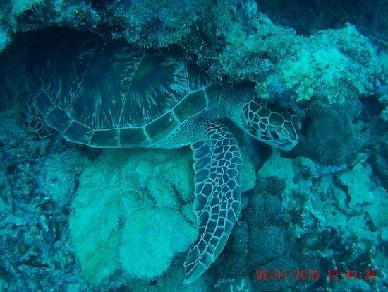 Victoria, Seychelles: A friendly turtle