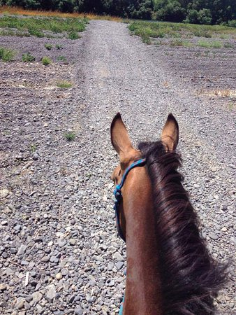 Clive, New Zealand: Heading to the Tukituki river on Nugget