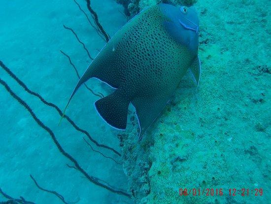 Victoria, Seychelles: One of many fish.