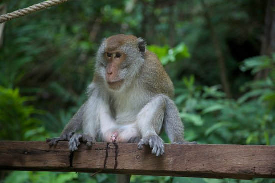 Monkey Trail: Well when you got to go you got to go