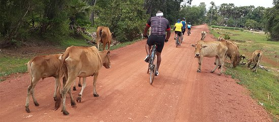 Cambodia Bike Tour - Day Tours