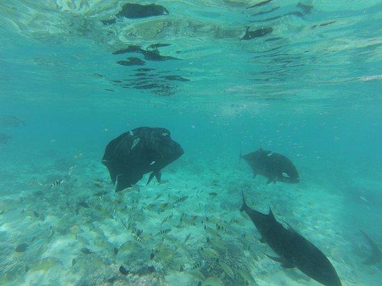 Black Pearl Charters: photo2.jpg