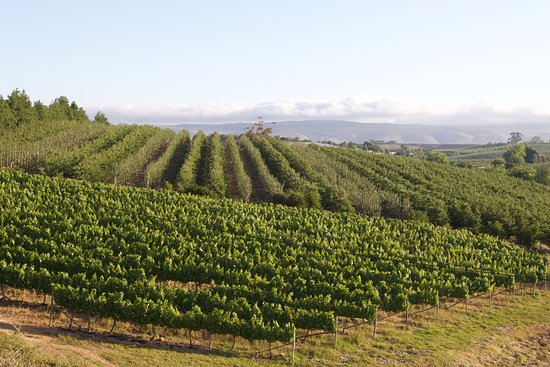 Grabouw, South Africa: Vineyard view from the cottages