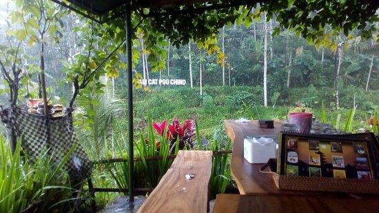 Kebun Kopi Luwak Bali