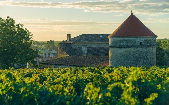 Rauzan, France: Vue des vignes du Domaine de Mercade