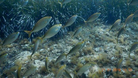 Tamariu, สเปน: Stollis House Reef