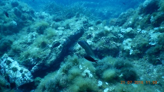 Tamariu, สเปน: Conga Reef
