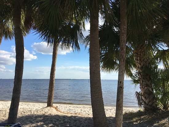 Harbor Heights Park: Palm Trees of Beach