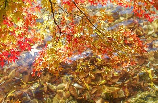 Tendo, Japan: スポーツを楽しむだけでなく、山形の四季の美しさをあちこちで見られるのがこの公園の素晴らしいところです。