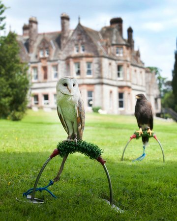 Glaslough, Irlanda: Falconry at Castle Leslie Estate