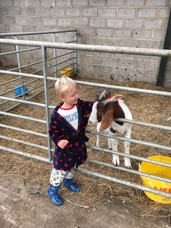 Hatherleigh, UK: Come and meet our herd of goats