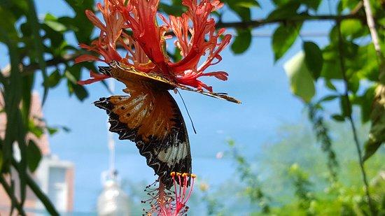 butterflies garden restaurant jolie fleur de papillon