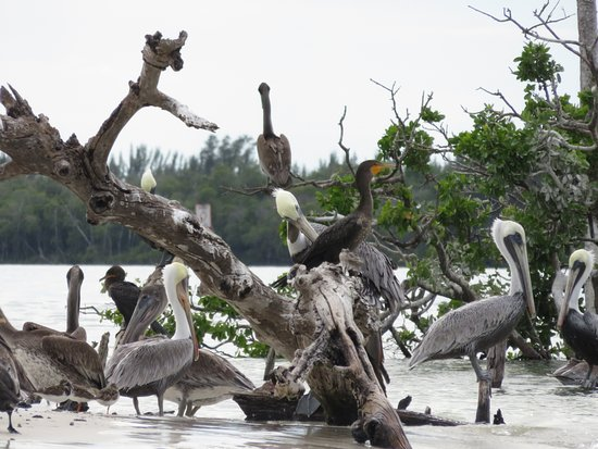 Caxambas Pass Park : Bird life hanging out on sandbar
