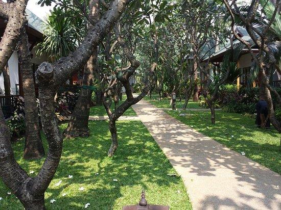 Banana Fan Sea Resort: 20140322_100351_large.jpg