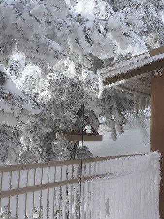 Sandia Park, NM: Winter wonderland at Sandia Crest House