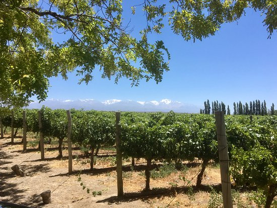 Mendoza Journeys: Wine country!