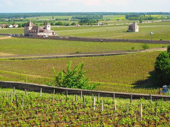 Clos de Vougeot - Vineyards above château