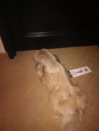 Old Stone Inn Boutique Hotel: Pooch trying to get fresh air from under the door