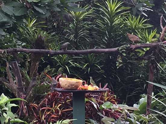 Bijagua de Upala, Costa Rica: photo2.jpg