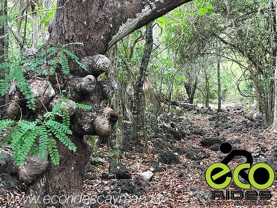 Explore Inland East End with ECO Rides Cayman. Let's Ride.....