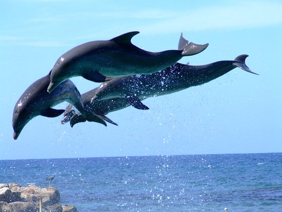 Dolphin World in Fort Lauderdale, FL| VISIT FLORIDA