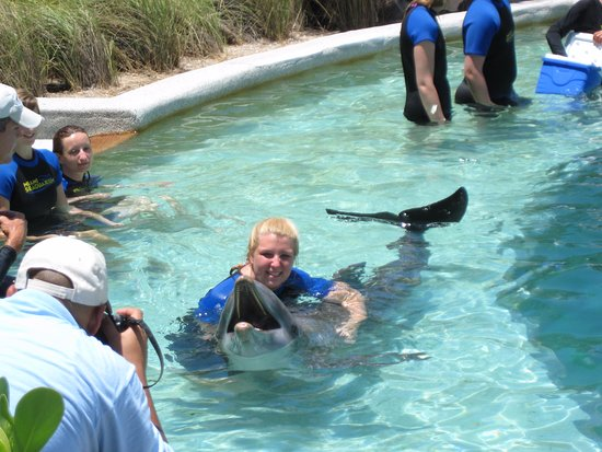New Dolphin World (Miami) 2019 All You Need to Know BEFORE You Go