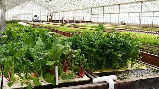 Ourboros Farm