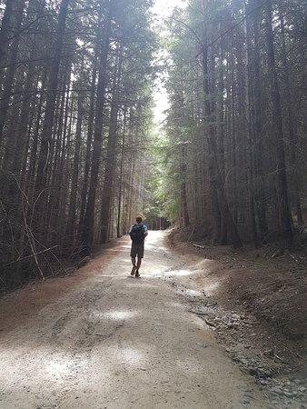 Tiki Trail