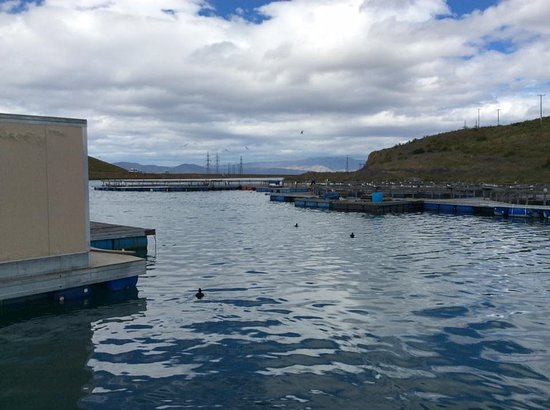 Twizel, New Zealand: ducks enjoying the water