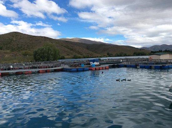 Twizel, New Zealand: scenery view