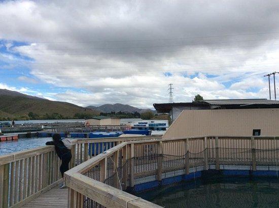 Twizel, Nueva Zelanda: scenery view-tank for salmon