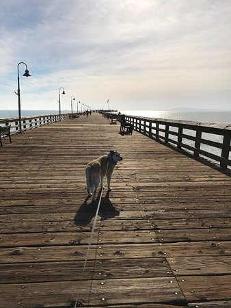 Ventura Pier and Promenade: The Adventure Dog checking out the pet friendly Ventura Pier