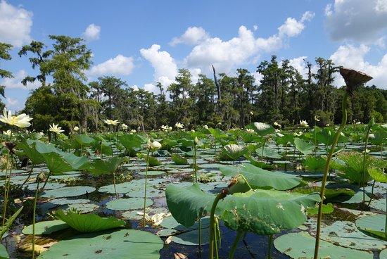 โบรซ์บริดจ์, หลุยเซียน่า: Cajun Country Swamp Tours