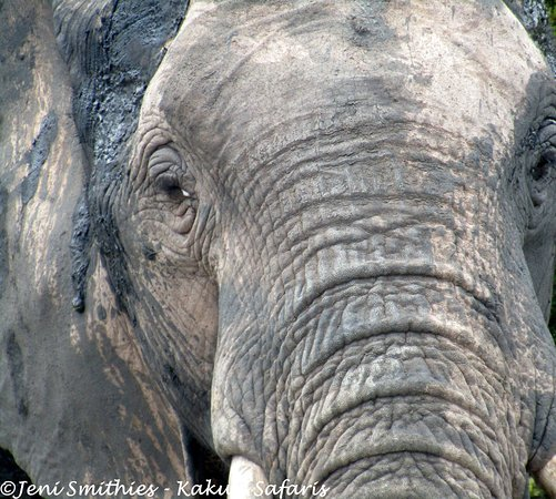Colchester, Zuid-Afrika: Timeless face  -  there's an ancient wisdom within these beasts.