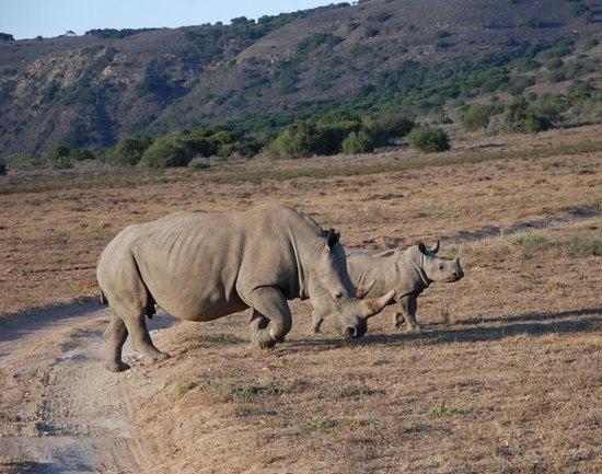 Amakhala Game Reserve, Sudáfrica: Alt und Jung