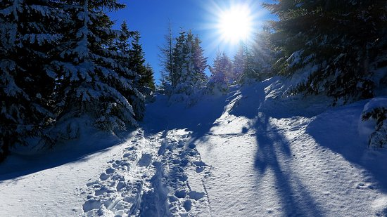 Reichenau an der Rax, Austria: Schneeschuhwanderung Natur