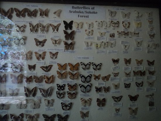 Cruzeiro Safaris: Butterfly musuem next to Gede Ruins
