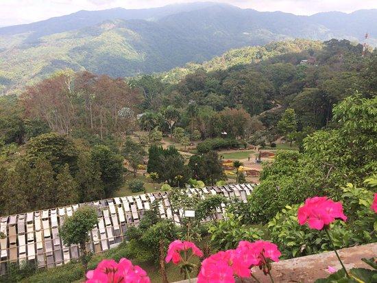 Mae Fah Luang Art and Culture Park: ดอกไม้หน้าพระตำหนักดอยตุง