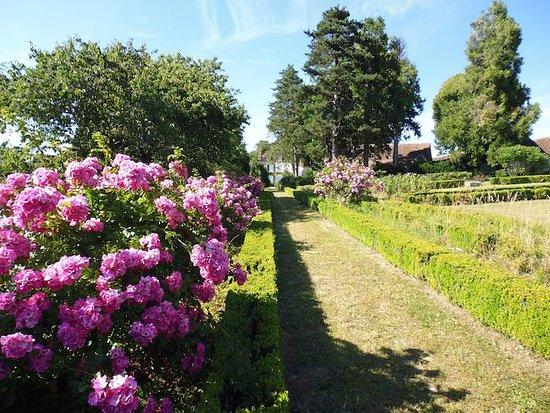 St-Cyr-la-Rosiere, France : Rosiers et buis au Potager