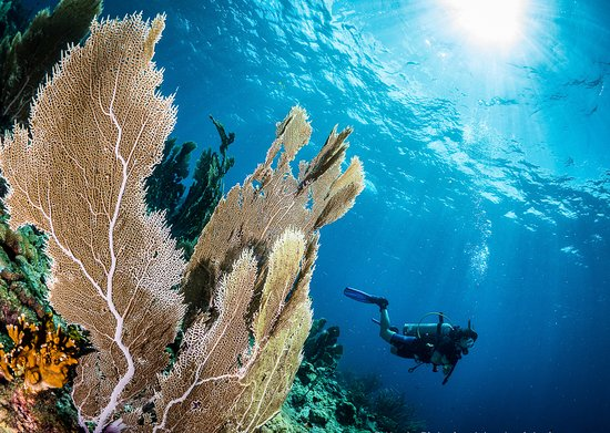 Speyside, Tobago: Explore our underwater heaven