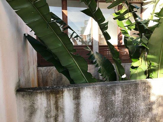 El Hotelito at the Rainforest Experience Farm: photo7.jpg