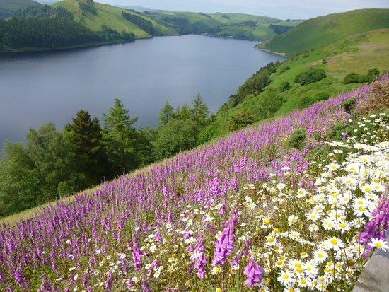Llanbrynmair, UK: Lake Clywedog