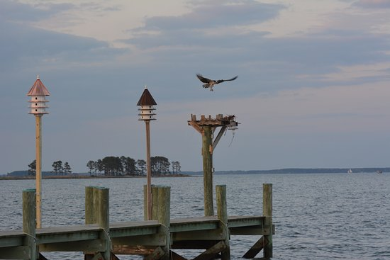 Tilghman, MD: Osprey nest at the end of our fishing dock.