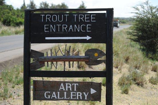 Trout Tree: Entrance