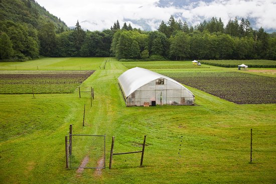 Rockport, WA: Cascadian Home Farm is a working, active, productive farm dedicated to bringing you organic food