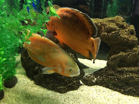 Odessa Delphinarium Nemo: photo8.jpg